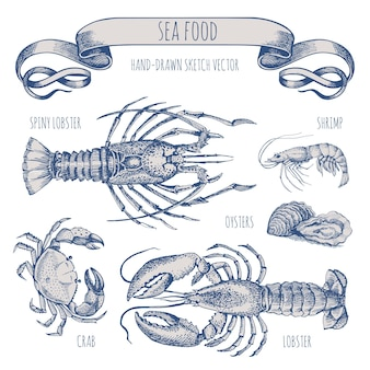 Sketch in vintage style for sea food restaurant menu design.