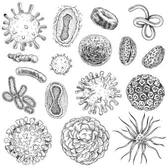 スケッチウイルス。バクテリア、コロナウイルス細菌生物学の微量有機元素。 covid-19ウイルス、癌細胞の手描きの彫刻ベクターセット。イラスト生殖微生物、covid-19描画スケッチ微生物