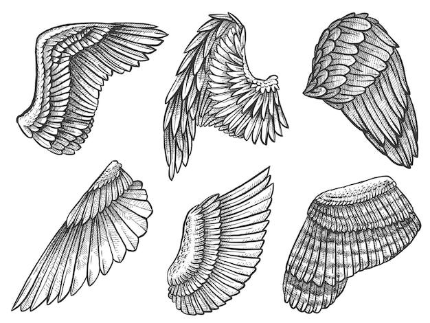翼をスケッチします。手描きのワシ、羽のある天使の詳細な翼、入れ墨の紋章の要素、カードまたはマスコットの刻まれた描画ベクトル。紋章の翼、精神的な自由の翼のある描画イラスト