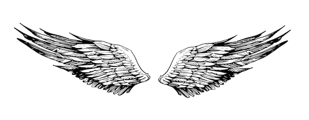 Sketch of wings. hand drawn illustration isolated on white