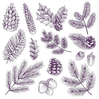 스케치 크리스마스 분기 세트. 레트로 크리스마스 홀리와 상록 그리기 스프루스 소나무 전나무 겨울 소나무 콘 솔방울 잎과 소박한 식물 빈티지 식물 요소와 나뭇잎