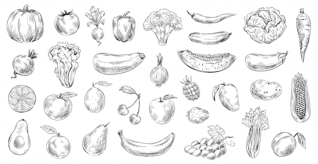 Набросал овощи и фрукты. ручной обращается органические продукты питания, гравировка овощей и фруктов эскиз иллюстрации набор