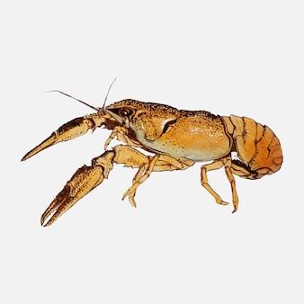 Sketches of crayfish by julie de graag