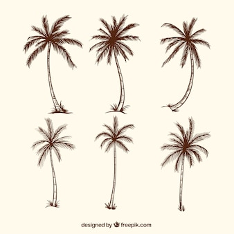 Sketches of palm trees