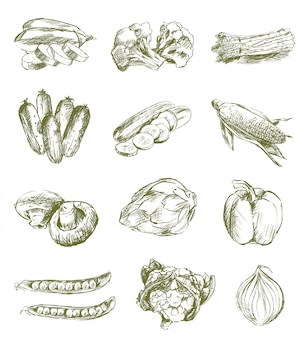 Sketches of vegetables