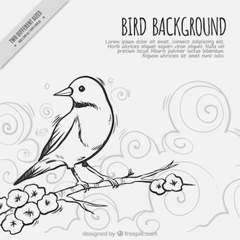 Эскизные птичка на ветке фоне