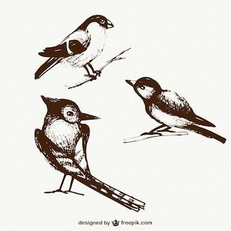 Эскизные птицы пакет