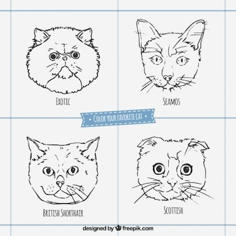 Эскизные лица кошка породы