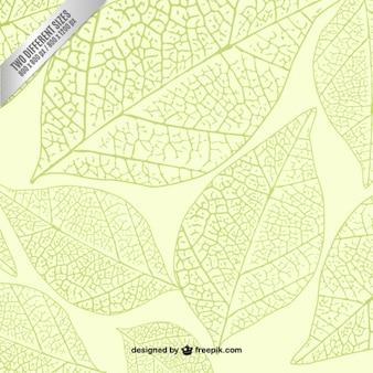 Эскизные зеленые листья фон