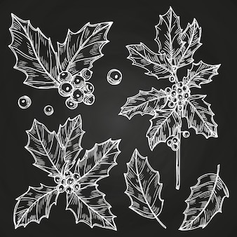 Sketchy leaves and berries set