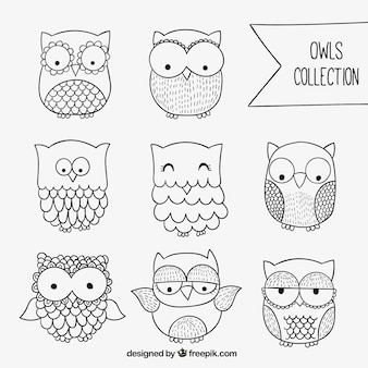 Sketchy owls collection