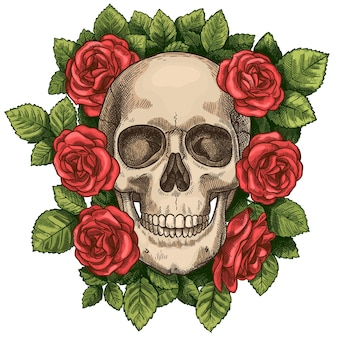 Череп и розы. мертвая голова скелета и красные цветы, рисованная готическая татуировка. винтажный страшный символ вектора эскиз смерти хэллоуина. красочный цветок и зеленая листва вокруг головы