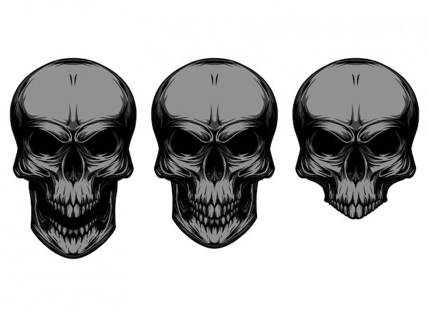 Skull in different types