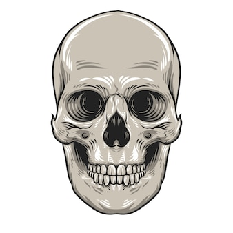 Skull head with jaw ilustration