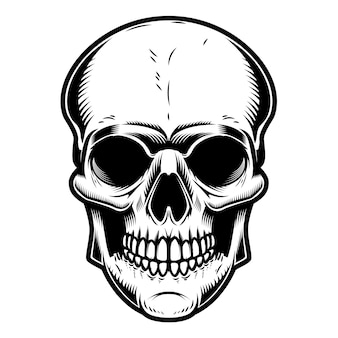 Skull illustration  on white background.  element for poster, emblem, sign, badge.  illustration
