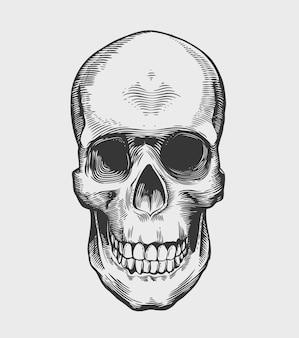 Skull in vintage engraving style. vector illustration.