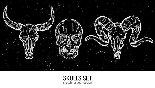 頭蓋骨スケッチセット。手描きのベクトル図