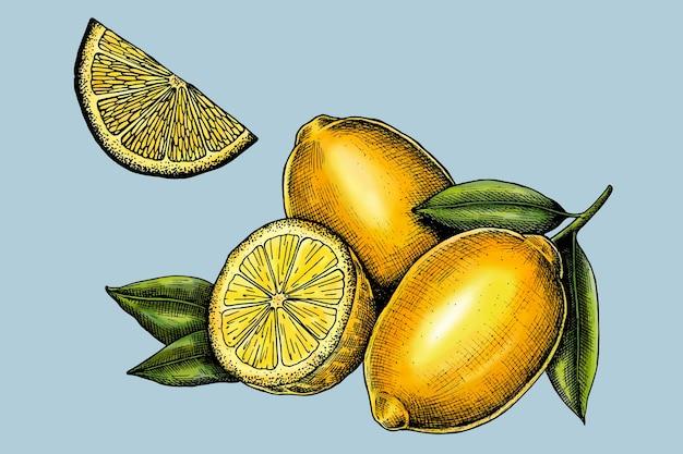 スライスした新鮮なジューシーなレモンのベクトル