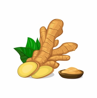 Sliced ginger and powder cartoon illustration isolated