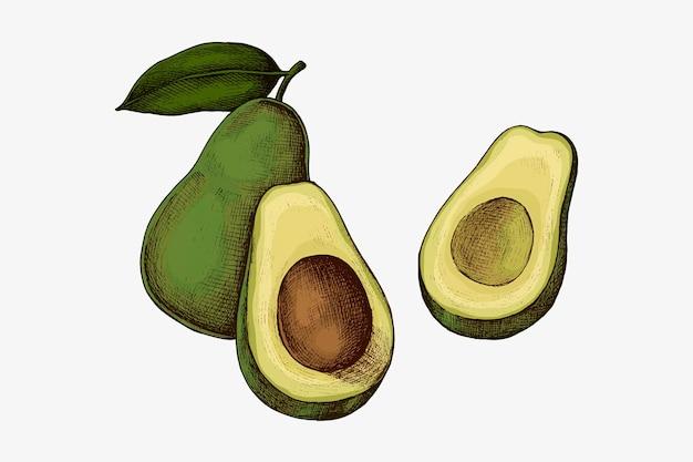Sliced ripe green avocado