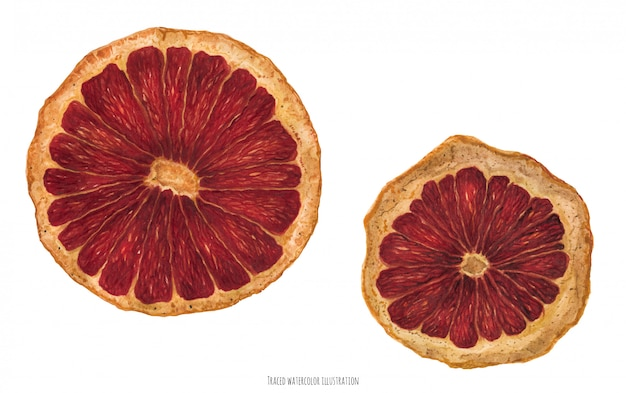 Slices of dried orange for christmas ornament, traced watercolor