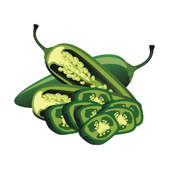 Slices of raw jalapeno pepper. vector illustration