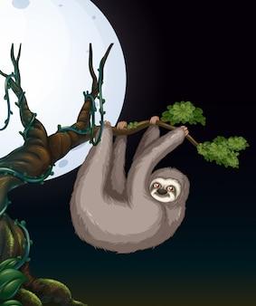 夜の木の枝でのナマケギ