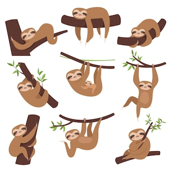Sloth on branch. cute little kid sleepy animal on branch in zoo playing with baby hanging vector characters cartoon