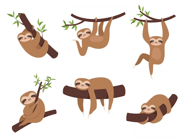 Sloth characters. cute sleepy animal on branch tree kid climbing vector cartoon