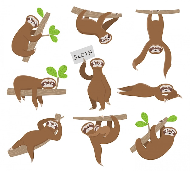 Sloth. cute baby animal sloths hanging on tree branch of rainforest. funny characters
