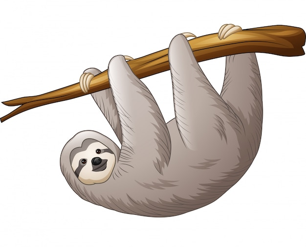Sloth hanging on a branch