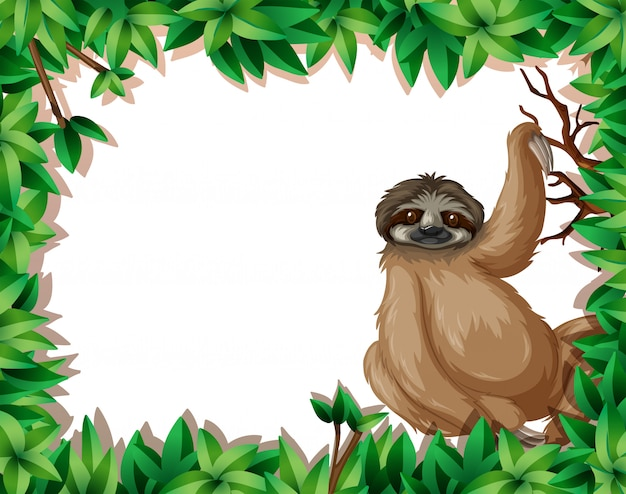 A sloth in nature frame