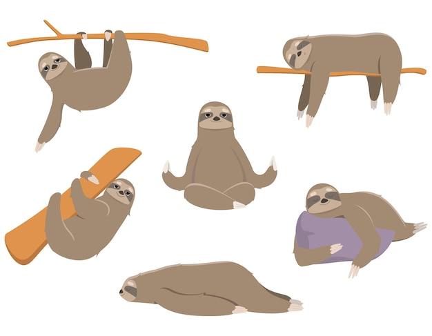 Sloths in different poses. lazy animals isolated on white background.