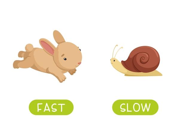 Slow 및 fast 반의어 단어 카드
