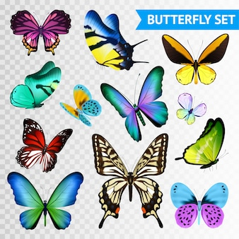 Small and big multicolored butterflies set isolated on transparent background