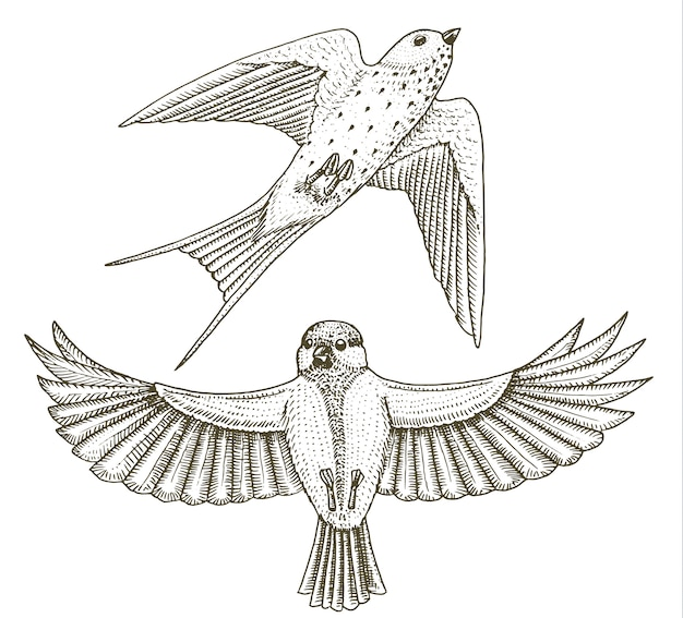 Small birds of barn swallow or martlet and parus or titmouse or great tit in europe. exotic tropical animal icons.