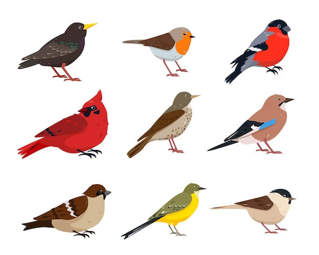 Small birds in different poses isolated on white background