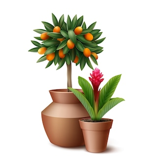 Small citrus tree and blooming flower in clay pots isolated