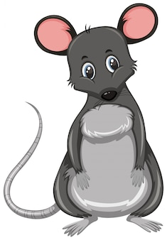 Small cute grey rat