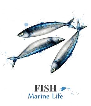 Small mackerel fish watercolor