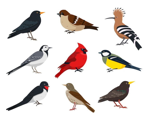 Small songbirds collection sparrow tit thrush swallow hoopoe wagtail red cardinal and starling bird in different poses