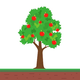 Small tree with apple fruits. fruitful apple tree in the garden. flat vector illustration.