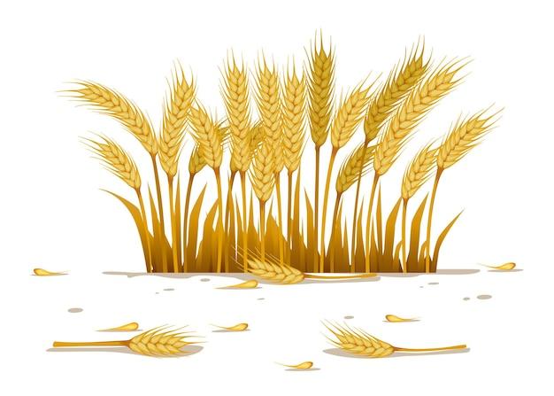 Небольшое поле пшеницы для иллюстрации сельского пейзажа на белом фоне
