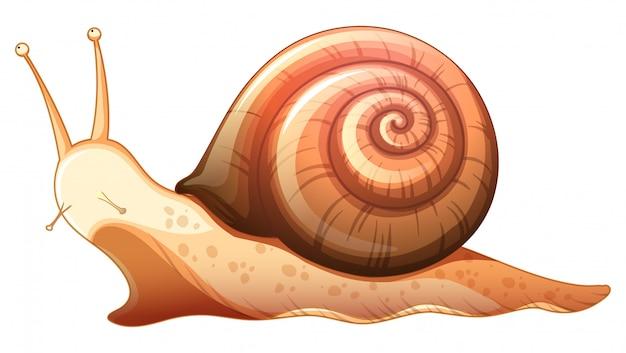 흰색 배경에서 크롤 링하는 달팽이