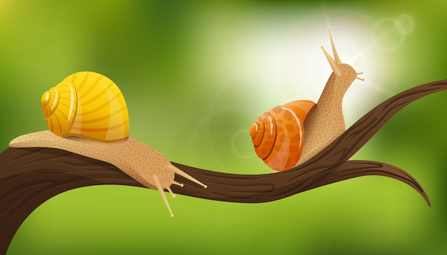 Snails in the wild illustration
