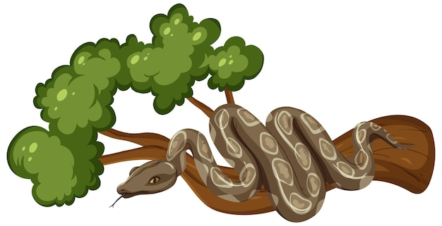 Snake on a branch isolated on white background