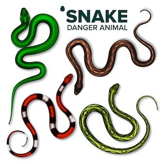 Snake collection of wild danger animal set