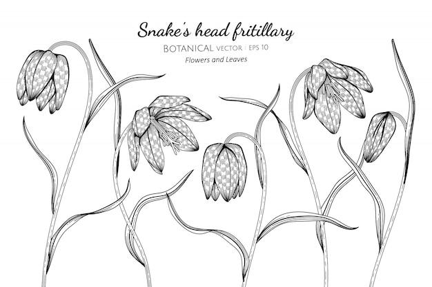 ヘビの頭ヒョウモンと葉手描きラインアートと植物イラスト