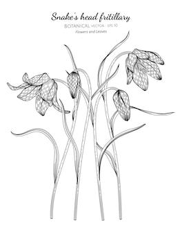 뱀의 머리 fritillary 꽃과 잎 손에 그려진 식물 그림