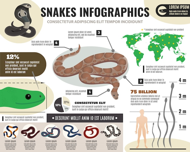 Snakes reptiles infographics